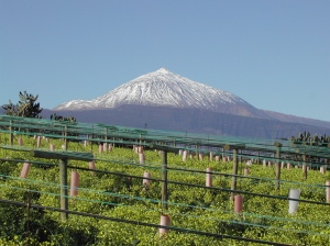 Vineyard in Tacoronte, Image from Bodegas Monje