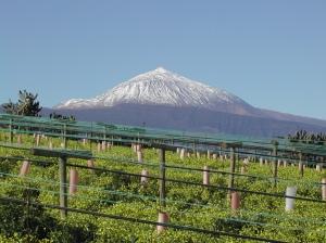 Vineyard іn Tacoronte, Image frоm Bodegas Monje