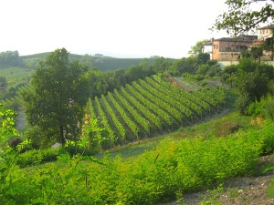 i Cortini Vineyard, Image from Castello di Neive