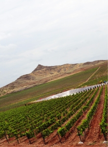 Vineyard, Image from Fratelli Wines