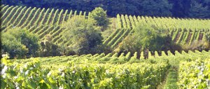 Ungeheuer Vineyard, Image from Weingut Eugen Muller