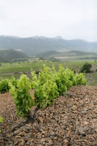 One of Orin's Vineyards in Maury, Image from Shatter Wines
