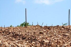 Volcanic Soil in Tokaj, Image from Sauska Wines