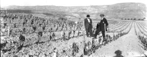 El profesor Alwod de California en Elciego. Aprox 1903. Vista una vina del Marques de Riscal. Image from jesusferiba flickr.