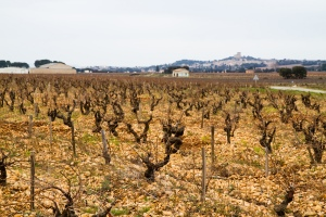 Chateauneuf du Pape Vineyard.  Image by moofbonb via flickr.  Licensed under Creative Commons.