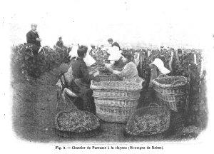 Fig. 9. - Chantier de Pareuses a la clayette (Montagne de Reims). [1]