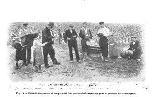 Fig. 14. - Controle des paniers et comptabilite faite par les chefs - vignerons pour le paiment des vendangeurs. [1]
