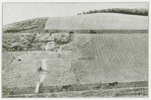 Partially finished sections of vineyard.