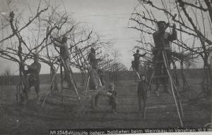 Use the Austrian soldiers during viticulture in Veneto  [1]
