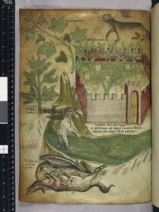 Miniature of plants, a walled garden, a wolf, a man fishing in a stream with a net, and a vulture pecking a carcass of an animal. Sloane 4016.  f. 108v. British Library.