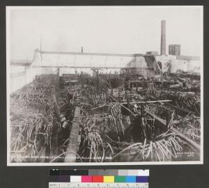 California Wine Association, Lachman Cellar, June 2, 1906. [3]