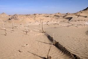 Niya, N.XLIV., vineyard with reed wall behind, from the south, 14 November 2011.  Image from IDP.