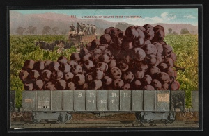 A carload of grapes from California. Mitchell, Edward H. c. 1909.  Library of Congress Prints and Photographs Division. [1]