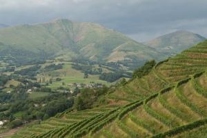 Vignoble de l'IroulŽguy - Pays Basque. Image from CRTA - Alain Béguerie. Flickr.