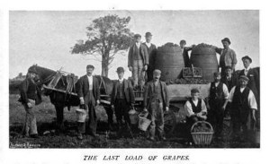 The Last Load of Grapes. c. 1898. [1]