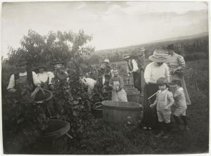Vendanges à Verrières. Thiollier Félix. c. 1890-1900. [1]