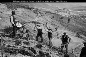 Travaux de vigne à Venthône.  Schmid, Raymond. 1930-1935. [1]