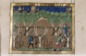 An 15th century Italian image showing the tending of vines. [1]
