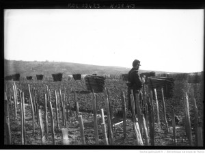A soldier guarding a vineyard in Ay after the Champagne riots of 1911. [1]