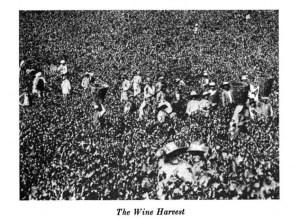 The Wine Harvest in Palestine. c 1917. [1]