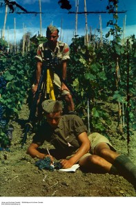 Canadian Gunners in Italian Vineyard. ca 1943-1965. Credit: Canada. Department of National Defence / Library and Archives Canada / ecopy [1]