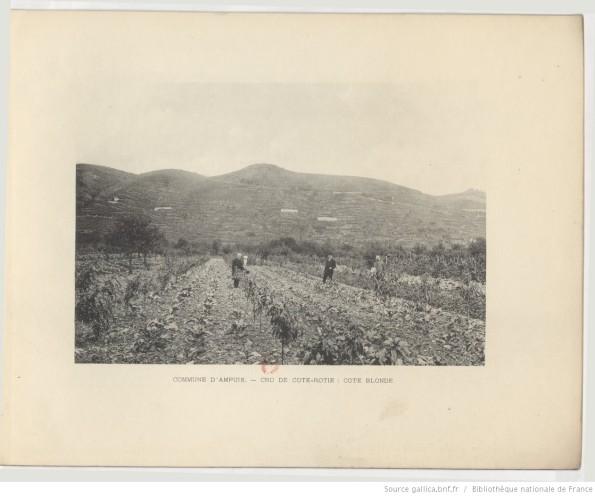 """""""Commune d'Ampuis. - Crus de Cote-Rotie: Cotes Blonde et Cote Brune."""" 1914 [1]"""